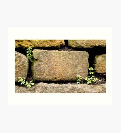 germination Art Print