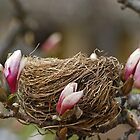 Nest In Spring Time  by Laura Retyi