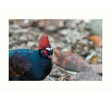 Male Crested Wood Partridge Art Print