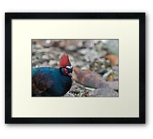 Male Crested Wood Partridge Framed Print