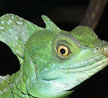 Green Basilisk by Peter Barrett