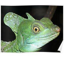 Green Basilisk Poster