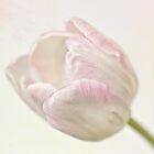 Pink sherbert by inkedsandra