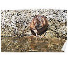 Mr Beaver Poster