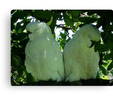 Sleeping Beauties Canvas Print