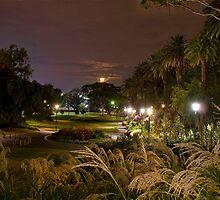 Park Lights by ea-photos