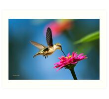 Art of Hummingbird Flight Art Print