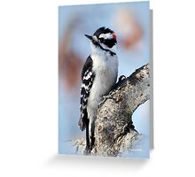 Tree Huggin' Nut Lover Woodpecker Bird Art Greeting Card