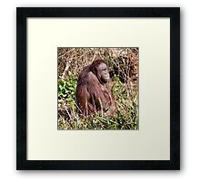 Did you Call ! Framed Print