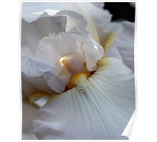 Immortality Iris Photo number 2 Poster