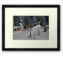 Penguin Parade Framed Print