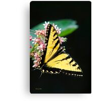 Swallowtail Butterfly and Milkweed Flowers Canvas Print