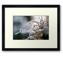 Decaying in the wind Framed Print