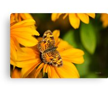 Pearl Crescent Butterfly Art Canvas Print