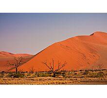 Sossusvlei trees Photographic Print