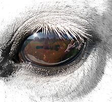 Reflection In A Golden Eye - Horse - VZ by AndreaEL