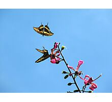 Free to Fly Photographic Print