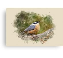Nuthatch Watercolor Art Canvas Print