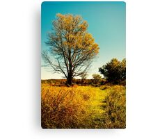 Nature's Path Landscape Art Canvas Print