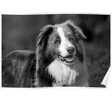 Doggie smile Poster