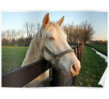 White Lightning-Horses of Kentucky Poster