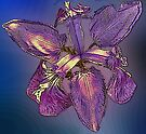 Iris With A Difference.  by Margaret Stevens