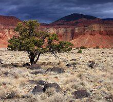 Desert Tree by David Kocherhans
