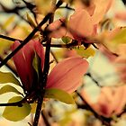 Dogwood in the Raleigh Spring by meowiyer