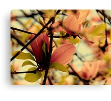 Dogwood in the Raleigh Spring Canvas Print
