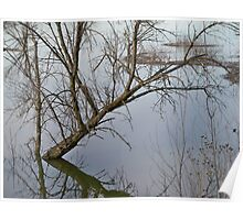 Tree Reflection, Minnesota River Flood waters Poster