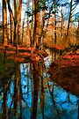 "Autumn Reflection by Christine ""Xine"" Segalas"