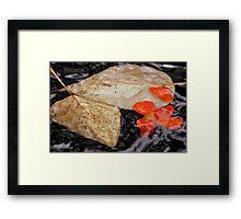 Autumn Leaves - Bear Creek Park, Surrey BC Framed Print