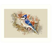 Bluejay Watercolor Bird Art Art Print