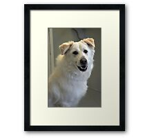 Dolly Framed Print