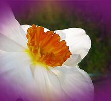 Narcissus - Welcome Spring by MotherNature