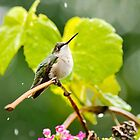 Hummingbird Shower by Christina Rollo