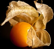 Cape Gooseberry by Jérôme Le Dorze