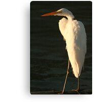 Snowy Egret Canvas Print