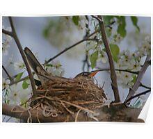 Robins Nest  Poster