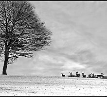 Red Deer in the Snow. by ten2eight
