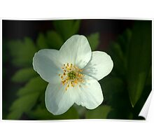 Simple beauty of one little flower Poster