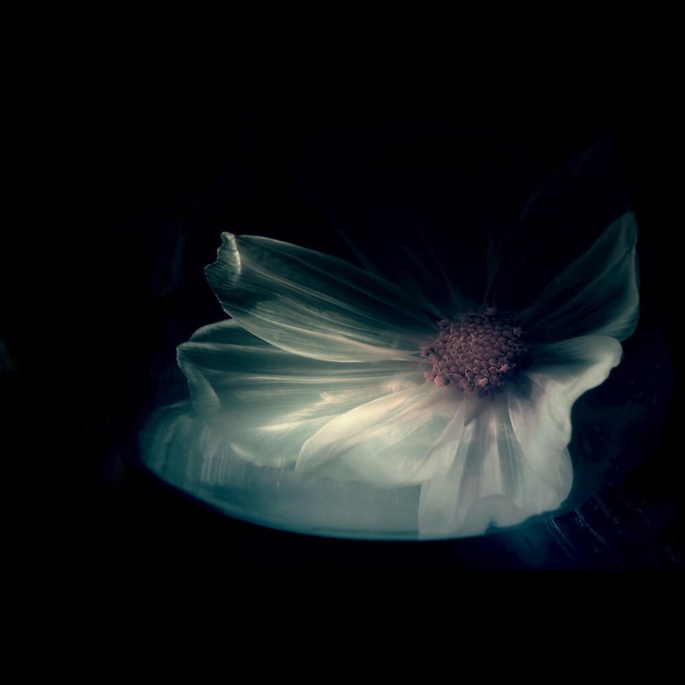 Interior Sweetness by Philippe Sainte-Laudy