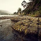 Tessellated Pavement Revisited by Martin Pot