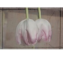 Pale Pink Photographic Print