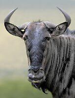 Wonderful Wilderbeest by Macky