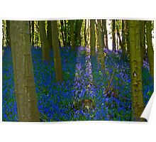 Blue bell woods. Poster