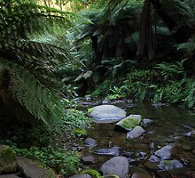 Barham River by Greg Thomas