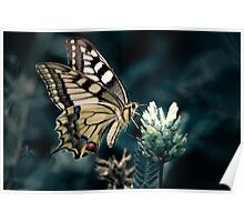 Common Yellow Swallowtail butterfly Poster