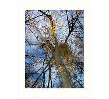 Autumn rememberance Art Print