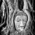 Buddha's Roots by Brian Winshell